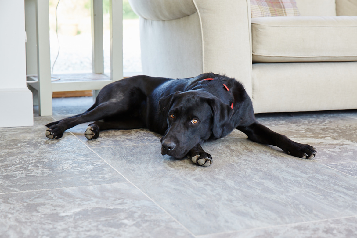 Black doggo sat on grey tiled stone floor
