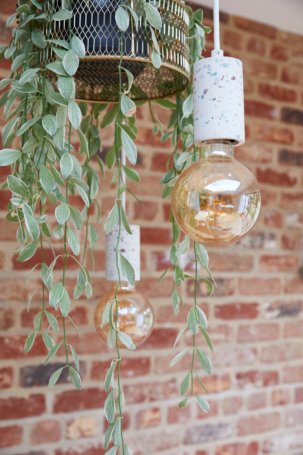 Hanging planter and bulbs with exposed brick backdrop